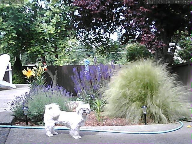 Astak MoleCam IP Camera Wireless home security Animal